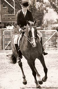 (Big Hat(G.B) x Fine Vintage(ITY), multiple Royal Show Champion Hack, also sidesaddle hack and also winner of Queensland Dressage Futurity. Twice member of the NSW State Dressage team.