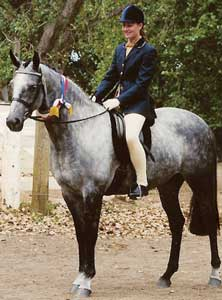 National Champion Led ANSA Mare