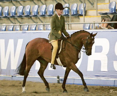 Furzey Kit-cat x Furzey Sweet Charity Royal Show and PR Show Supreme Champion, multiple HOY winner, successful showjumper, eventer and dressage pony. Dam of Farleigh Hermione, Farleigh Natasha etc.