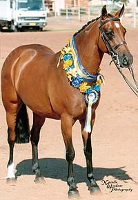 Supreme Champion Saddle Pony at Brisbane Royal - has also qualified for the Grand Nationals. photo N Wockner