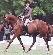 Samos x Writhgil Unique - NZ He has had a great season competing at 9 shows and gaining 6 Champion and 3 Supremes. Top 6 at the Royal. owned by Bec